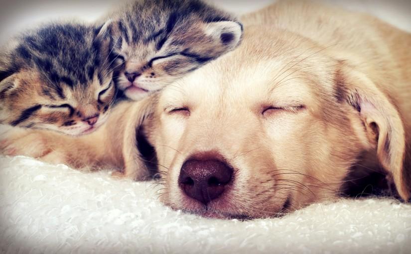 Lisää söpöjä eläinkuvia, kiitos!